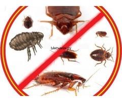 Клоп таракан дарылайбыз